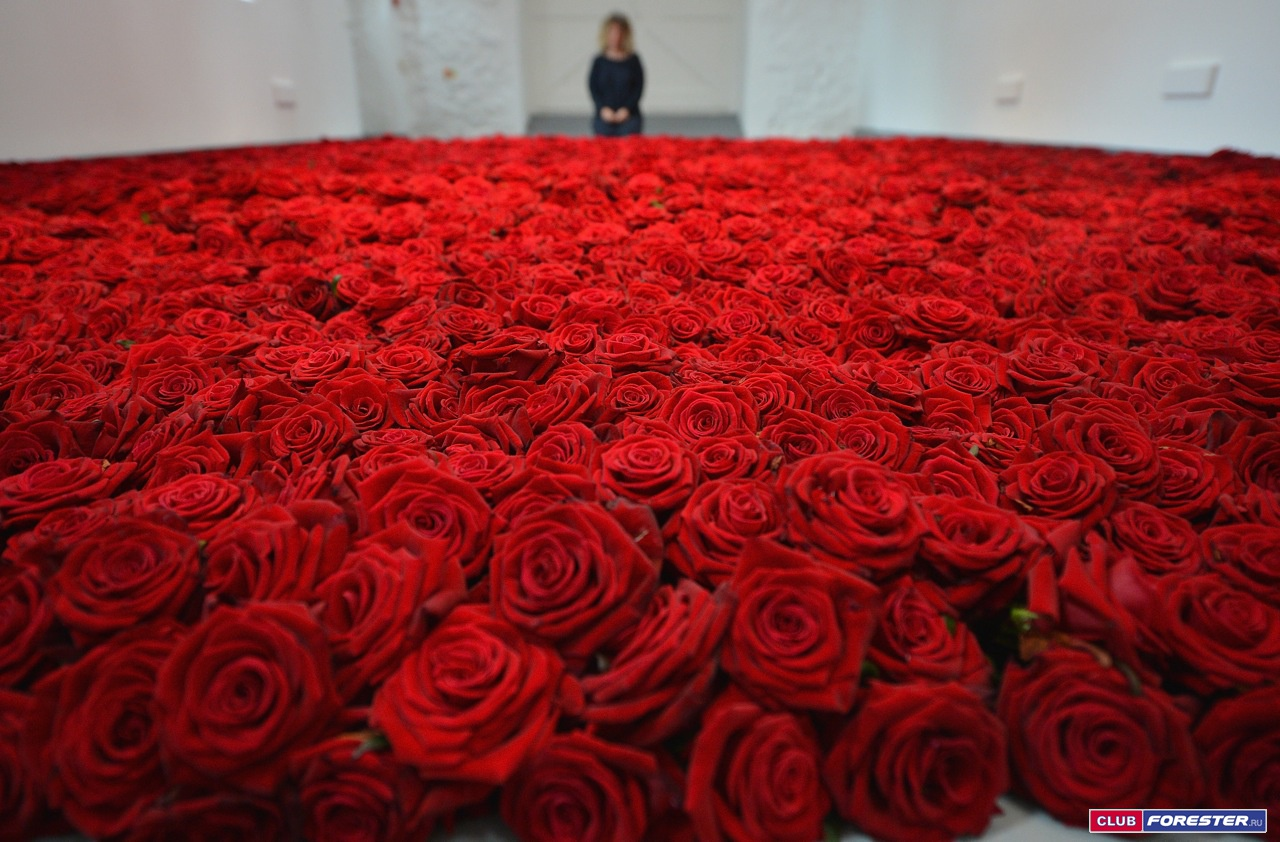 Цветы фото розы 1000